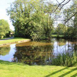 Harome Village Duck Pond